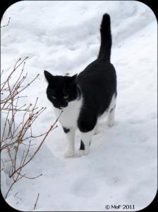 Mia på snö
