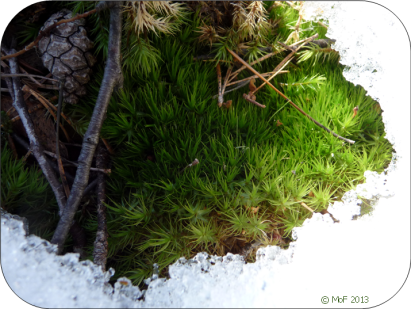 Mossgrönt