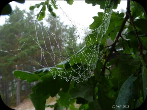 Spindelnät 2