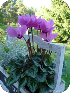 Blomlåda