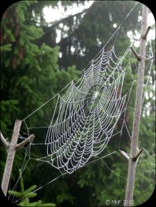 Spindelnät 3
