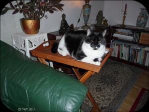 Mia på brickbordet