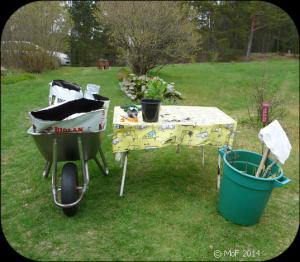 Plantering 2