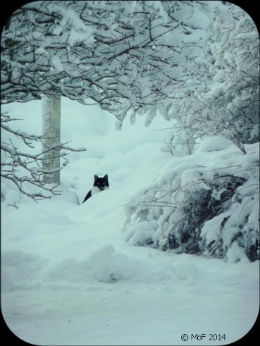 Mia i snön