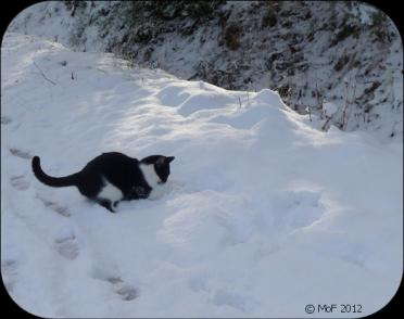 Mia busar i snön