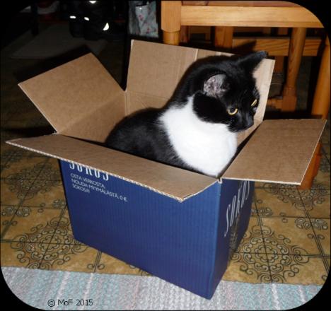 Mia i låda