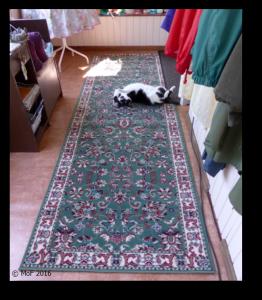 Mia på nya mattan